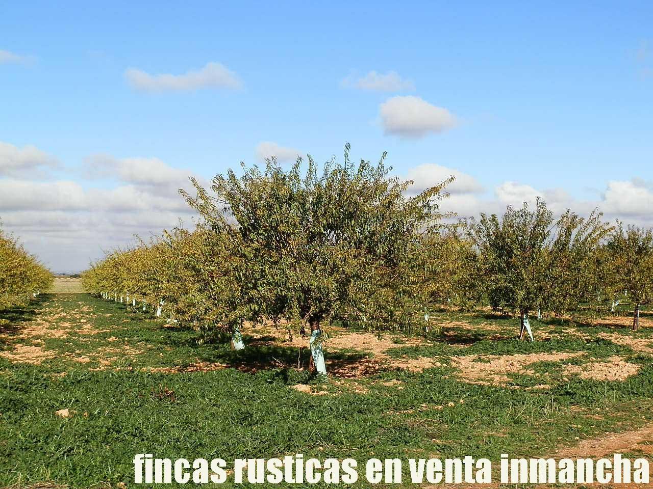 484_fincas-en-venta-26