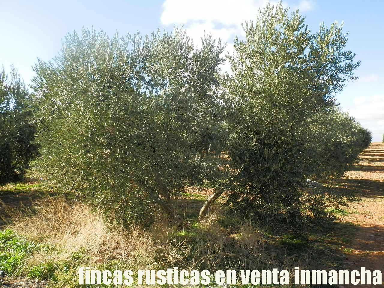 484_fincas-en-venta-33