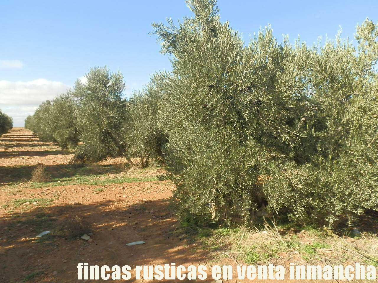 484_fincas-en-venta-34