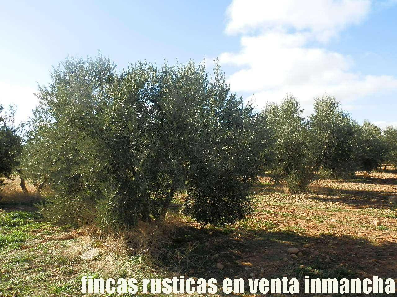 484_fincas-en-venta-36