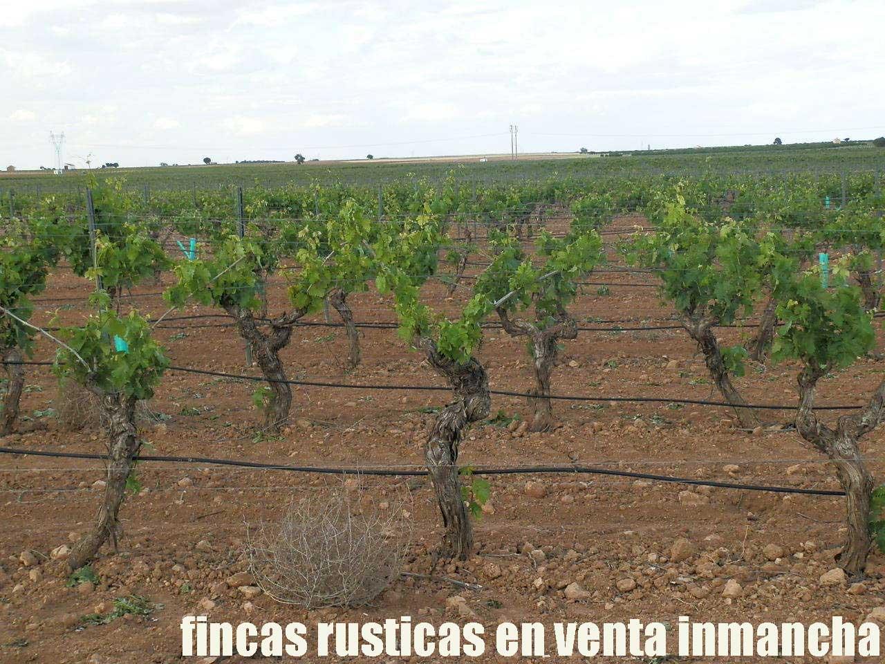 490_fincas-en-venta-39