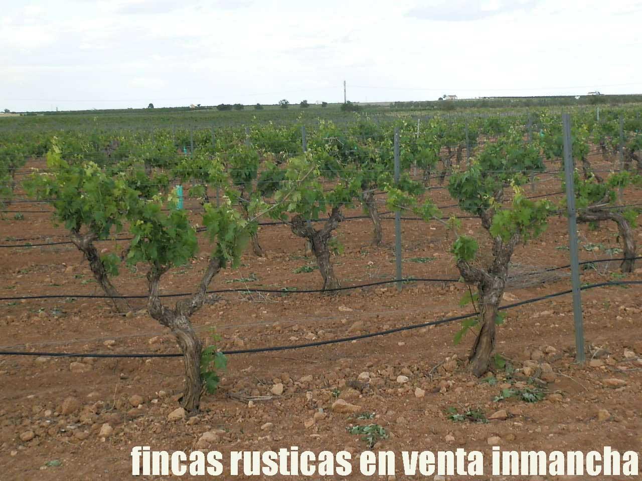 490_fincas-en-venta-40