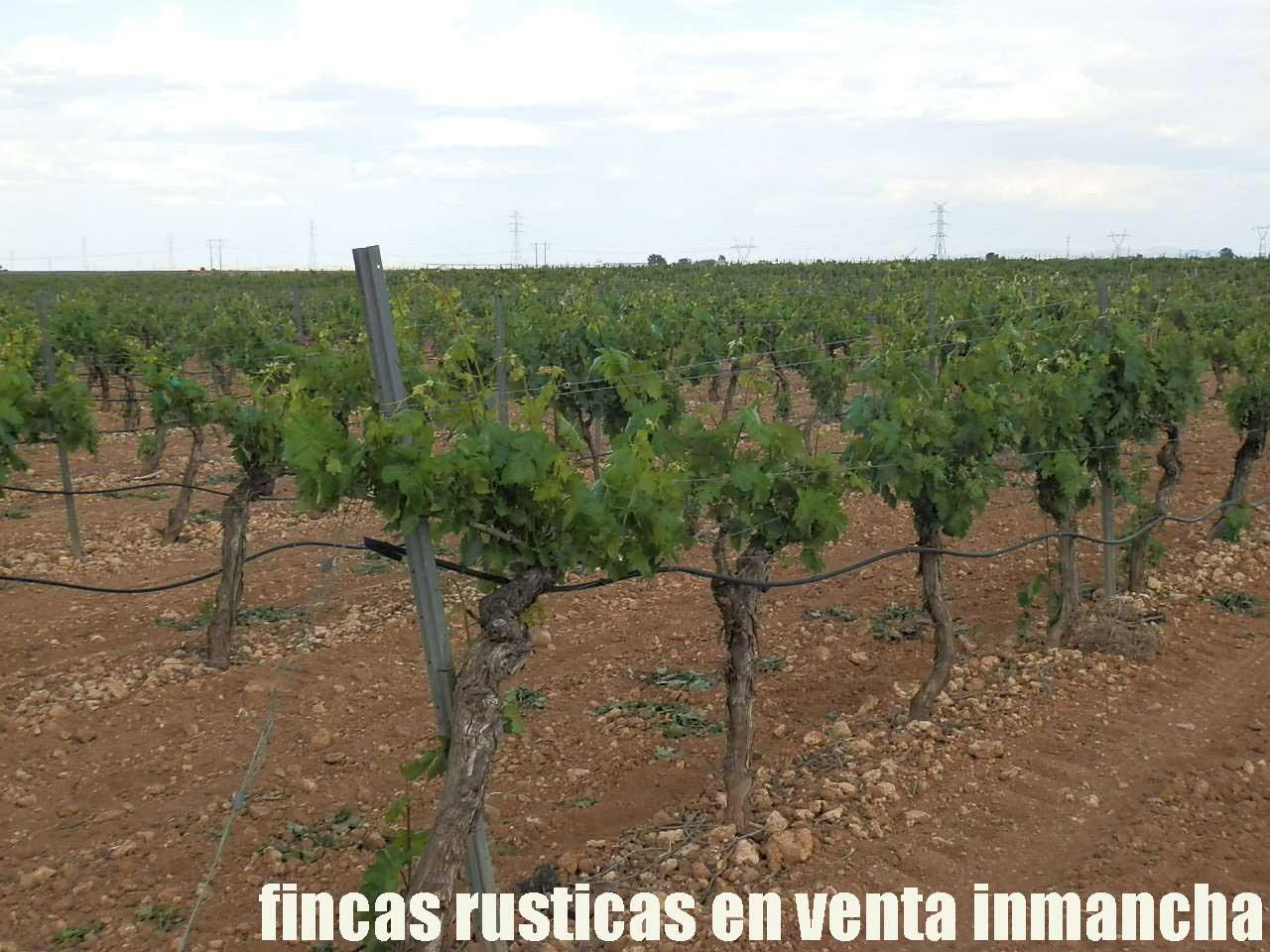 490_fincas-en-venta-41