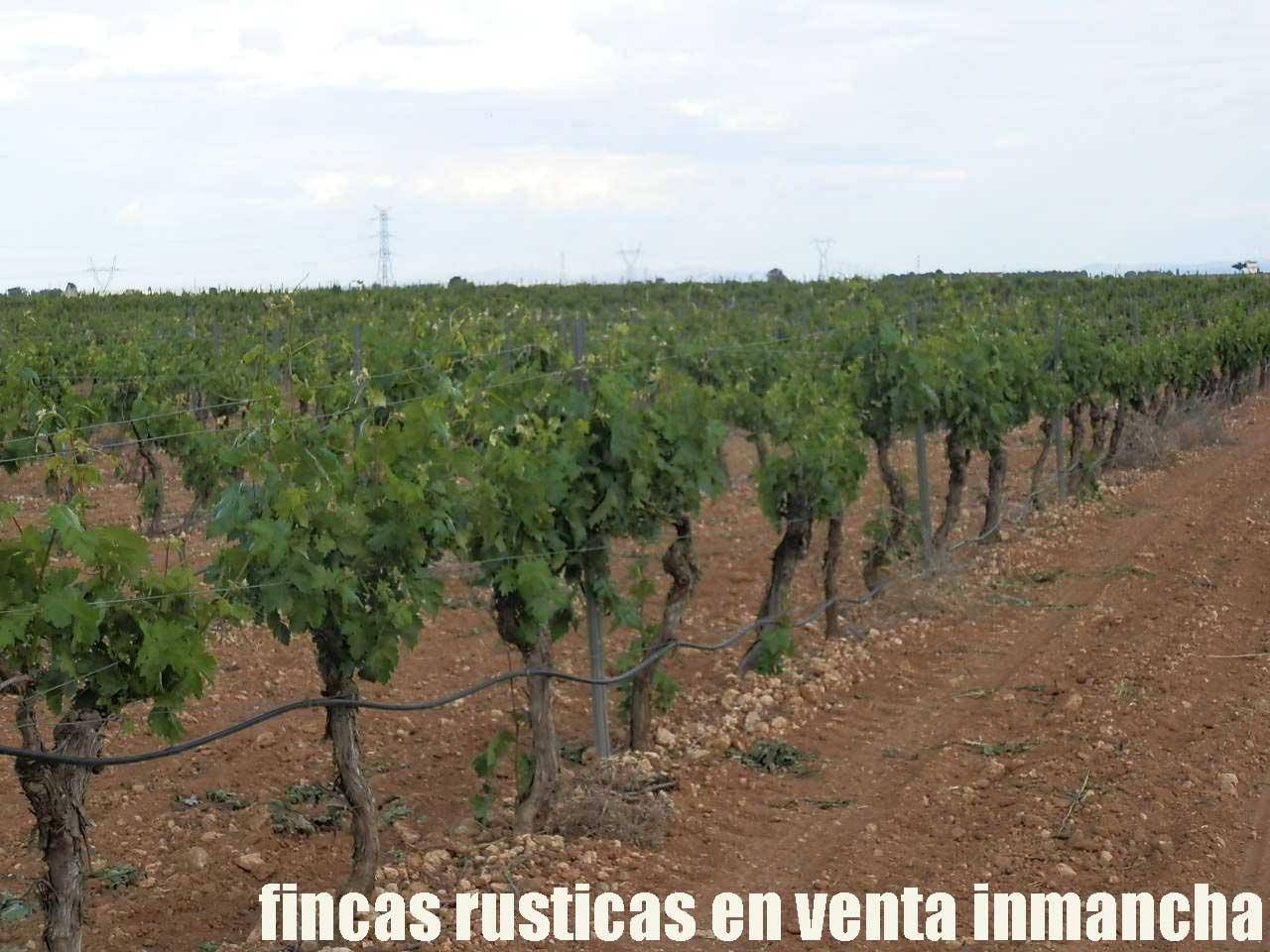 490_fincas-en-venta-42