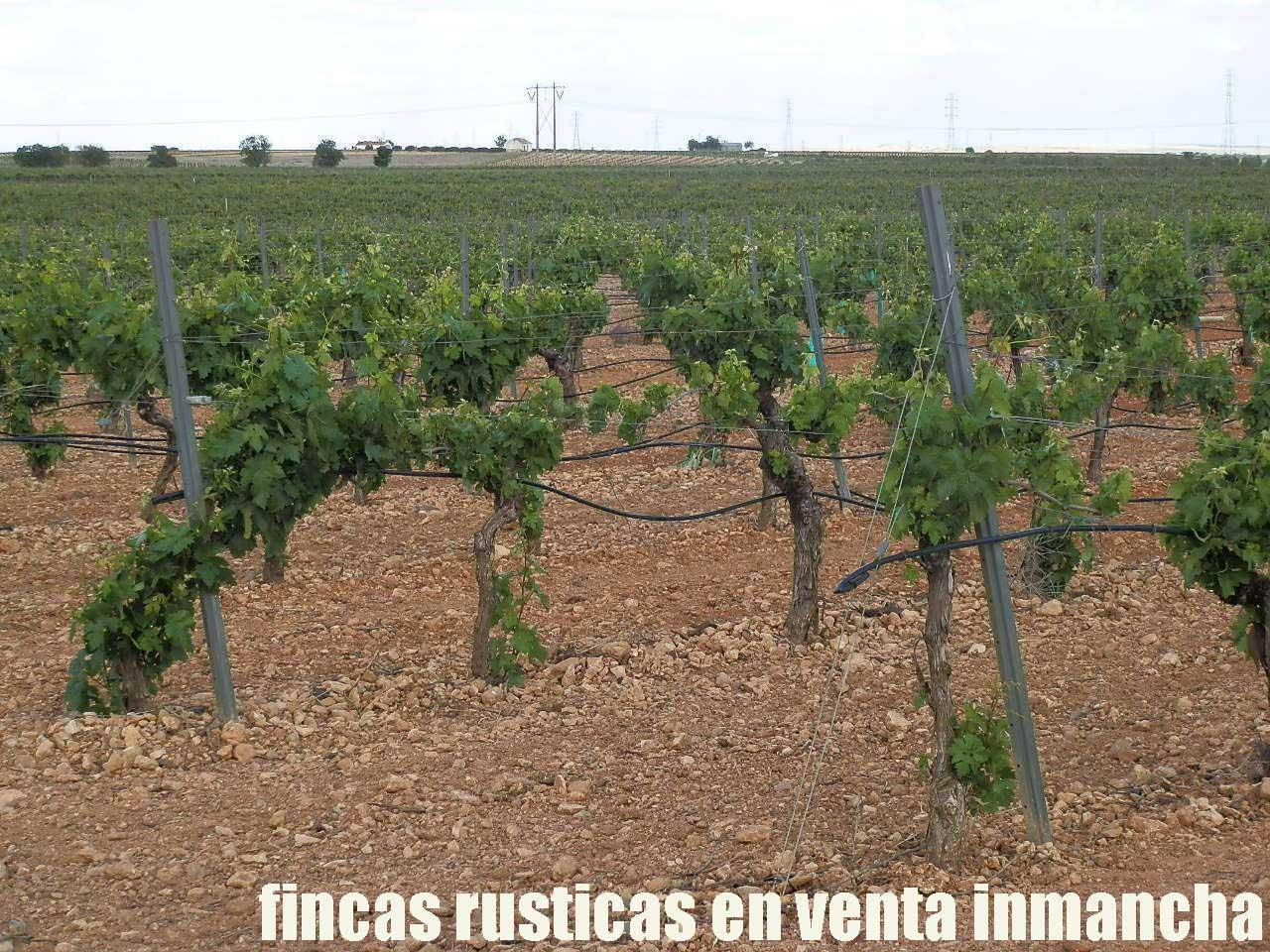 490_fincas-en-venta-45