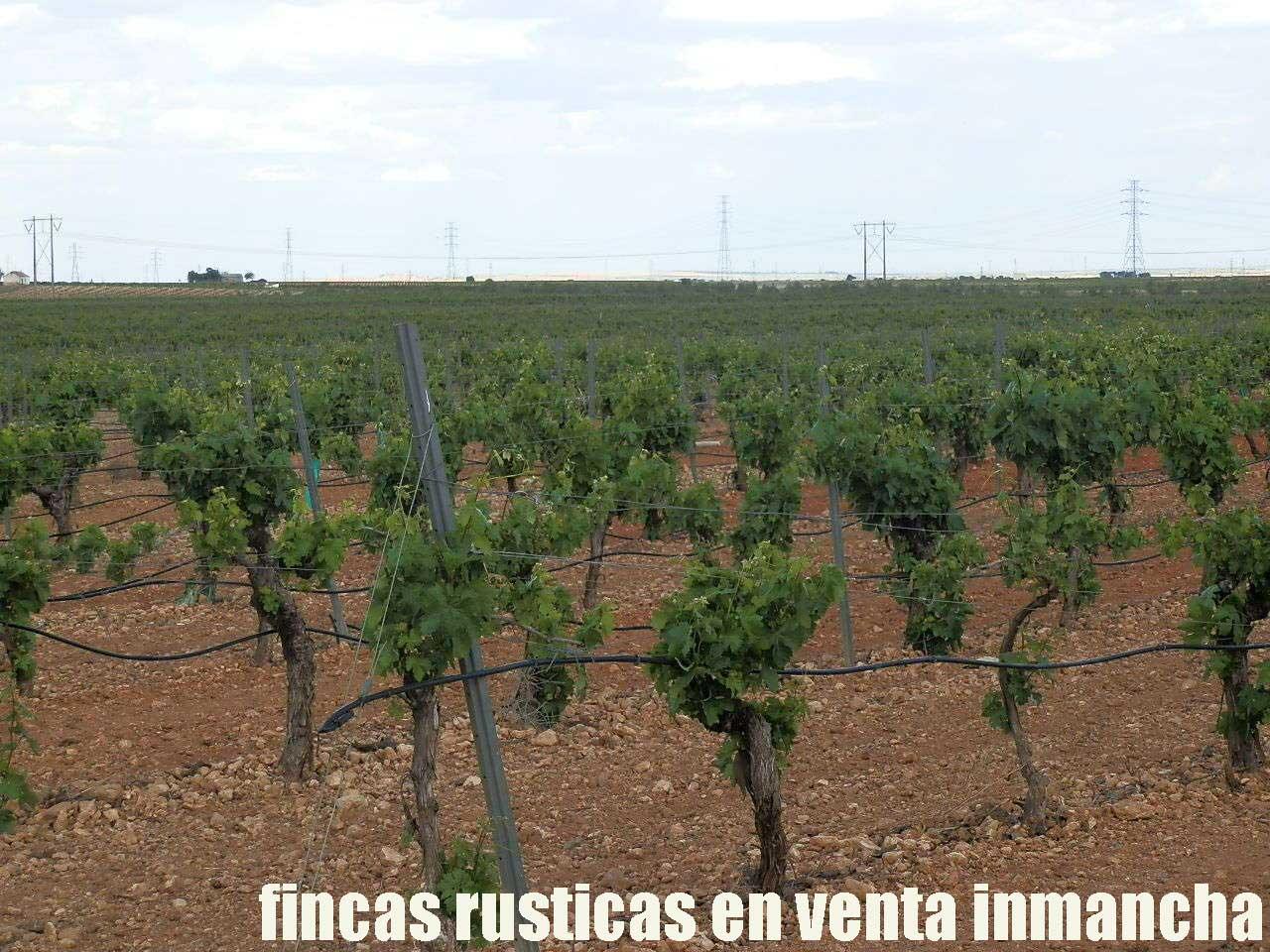 490_fincas-en-venta-46