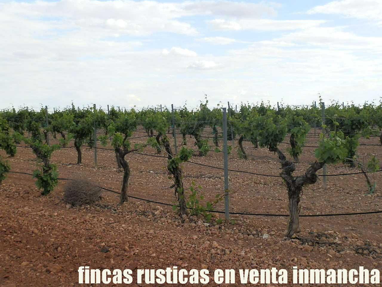 490_fincas-en-venta-47