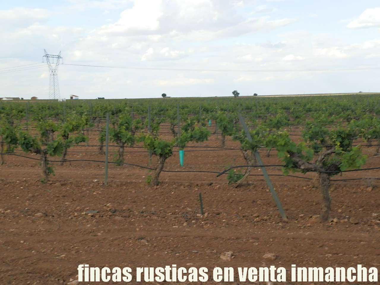 490_fincas-en-venta-52