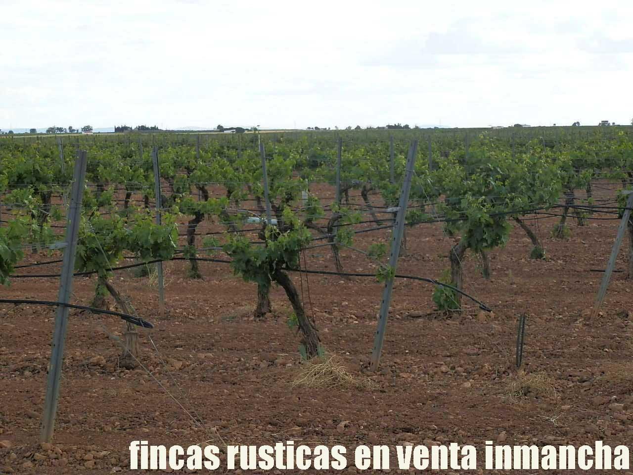 490_fincas-en-venta-57