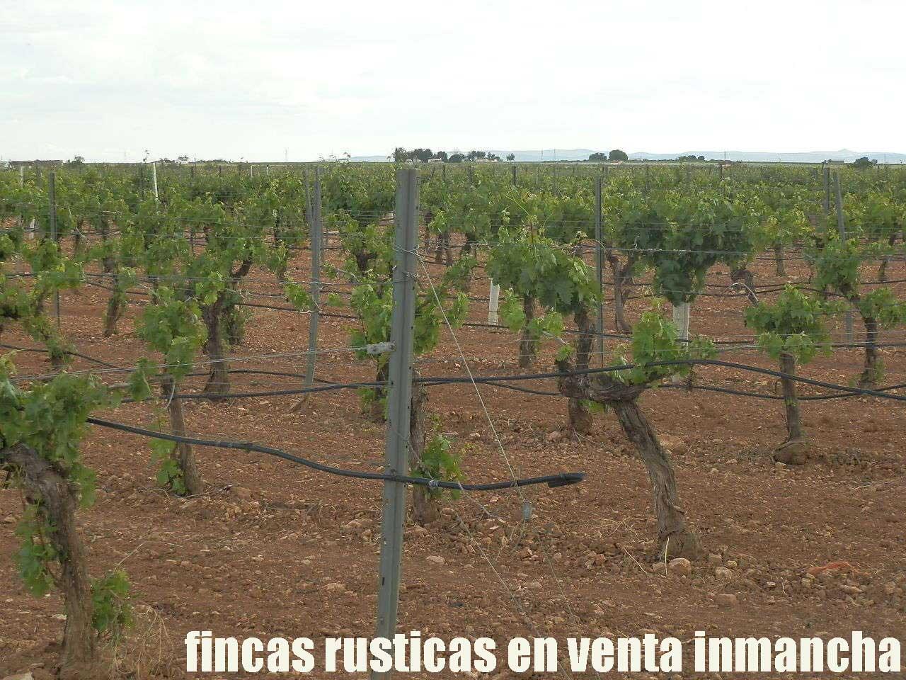 490_fincas-en-venta-58