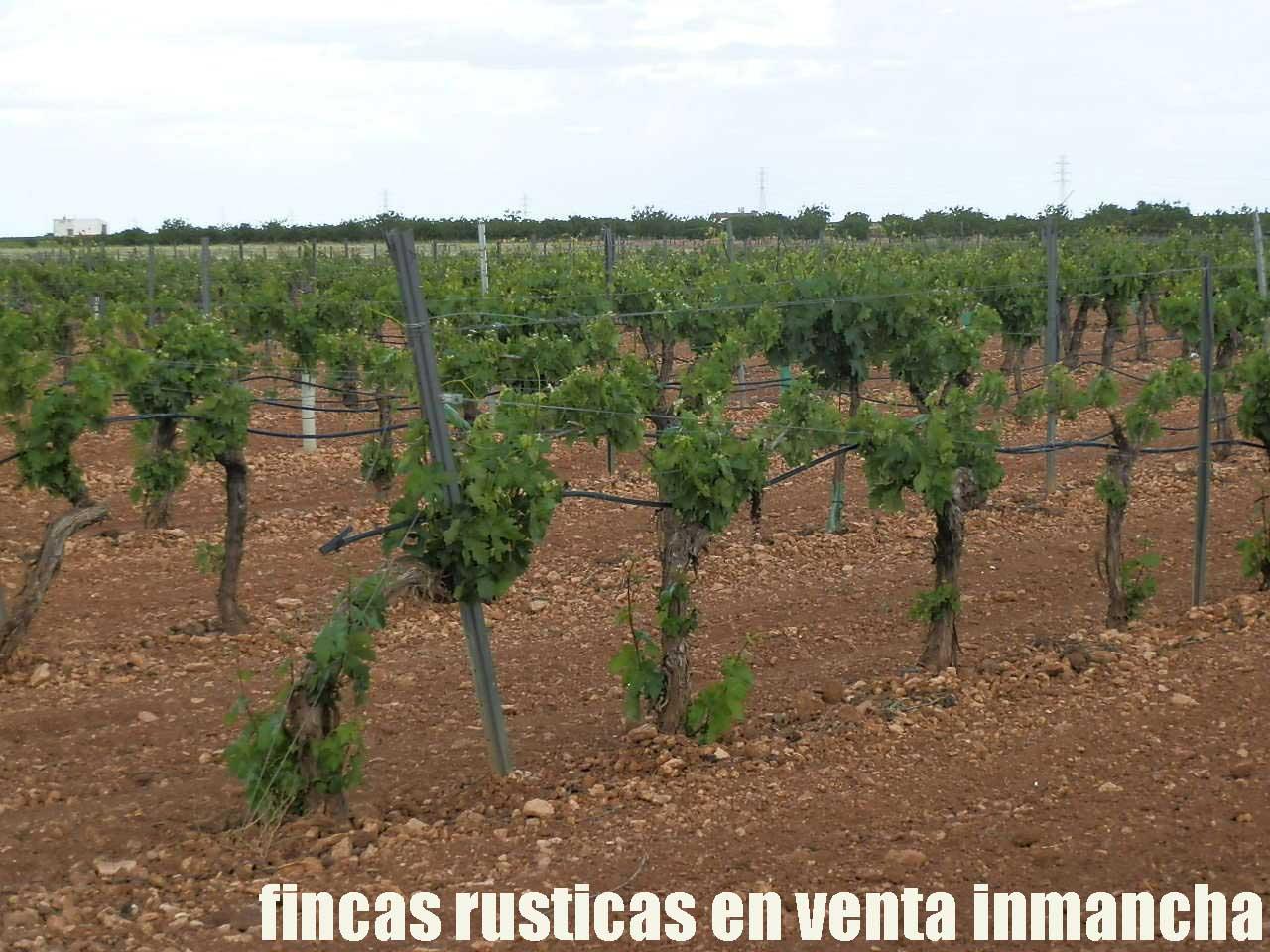 490_fincas-en-venta-59