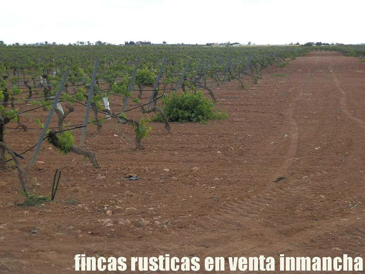 490_fincas-en-venta-61