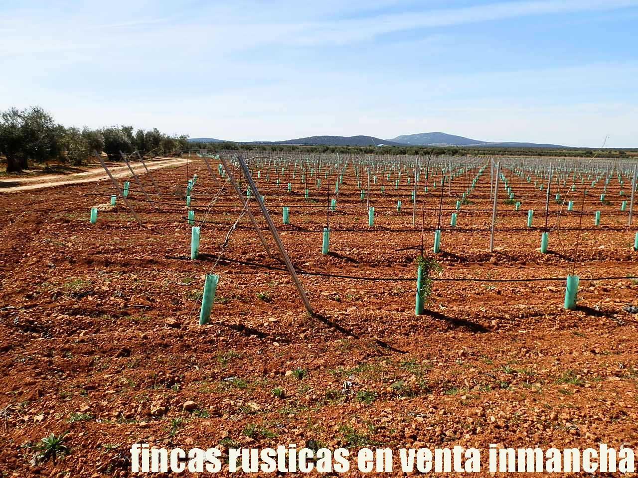 496_fincas-en-venta-0001