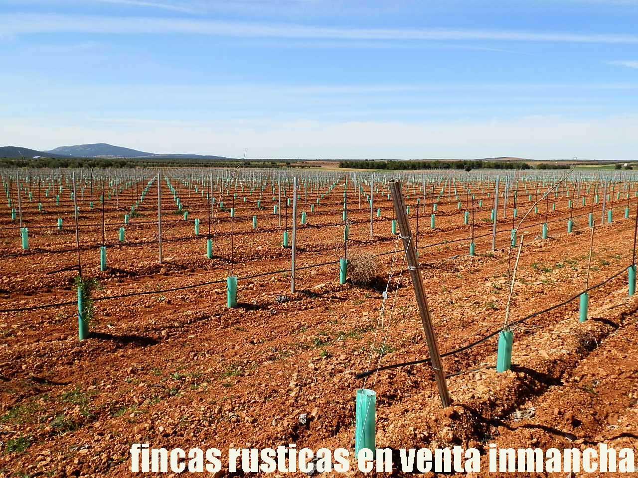 496_fincas-en-venta-0002