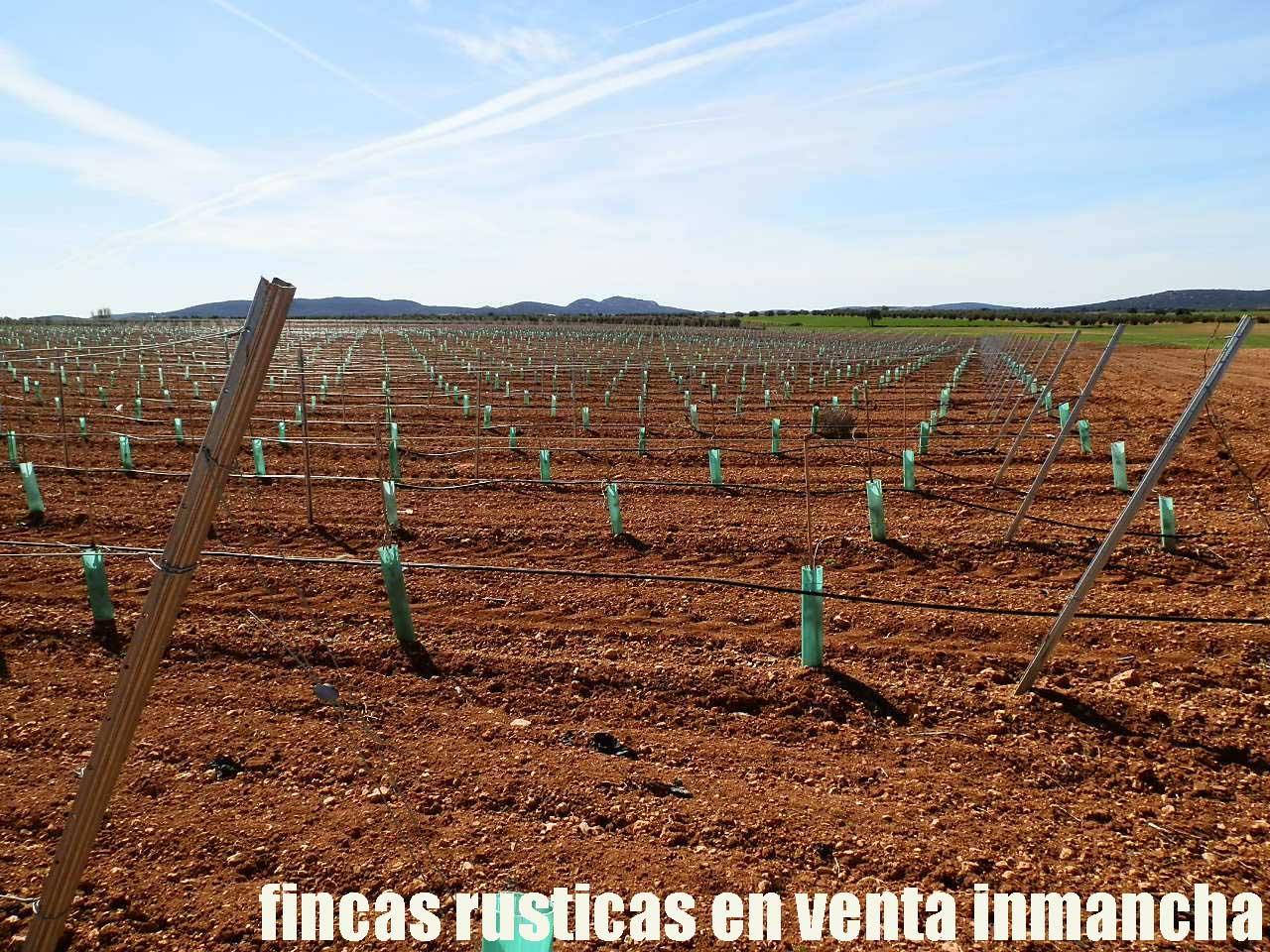 496_fincas-en-venta-0007
