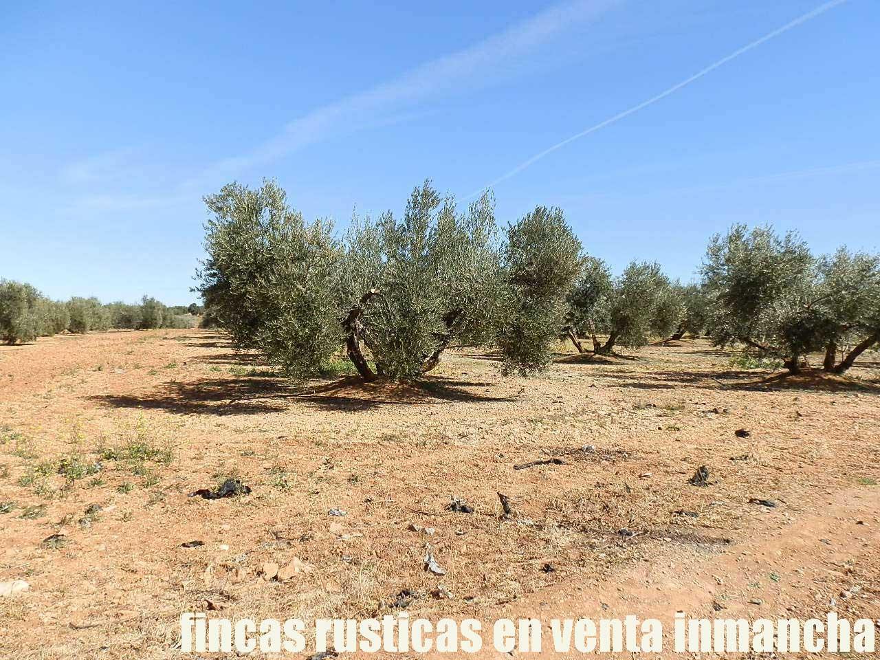 496_fincas-en-venta-0008