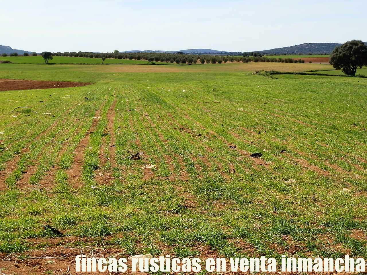 496_fincas-en-venta-0013