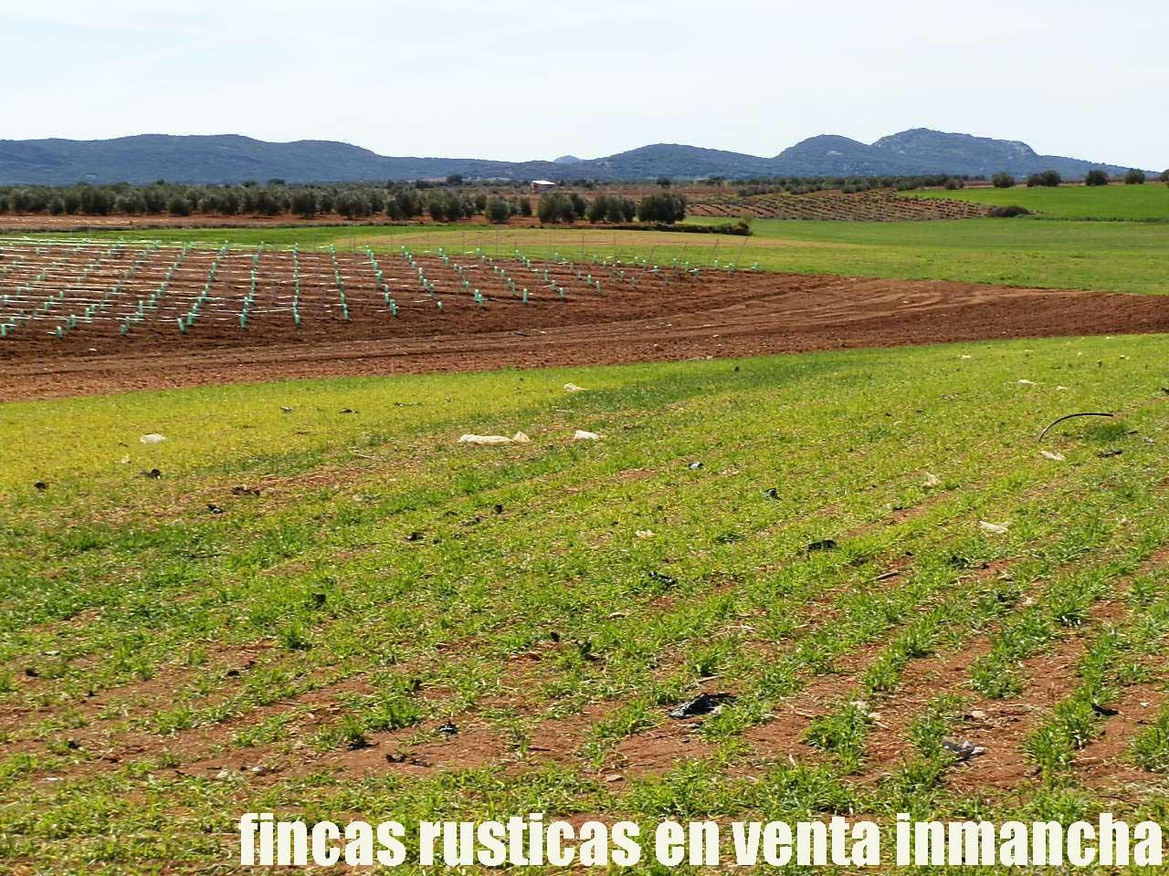 496_fincas-en-venta-0014