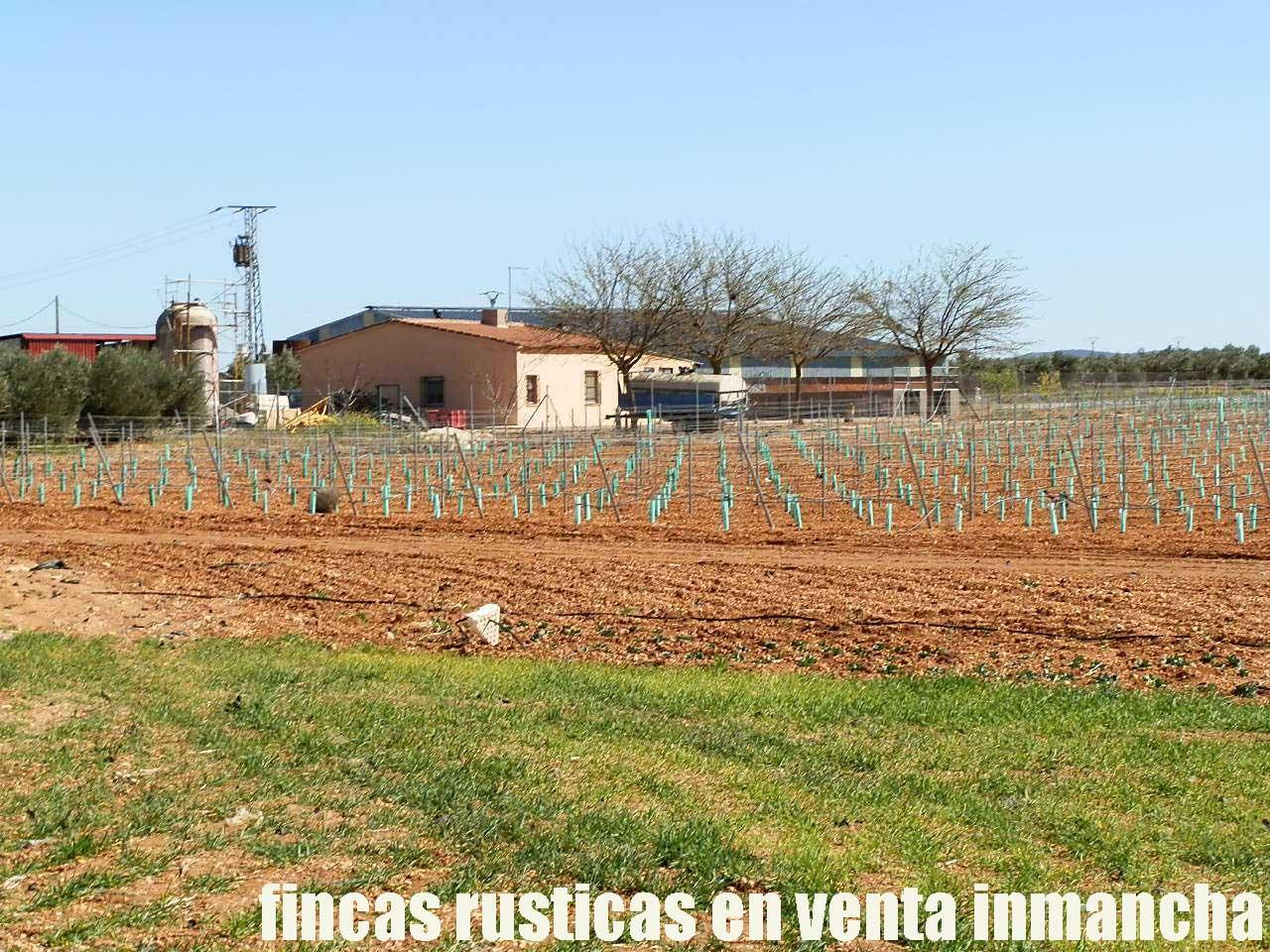 496_fincas-en-venta-0016