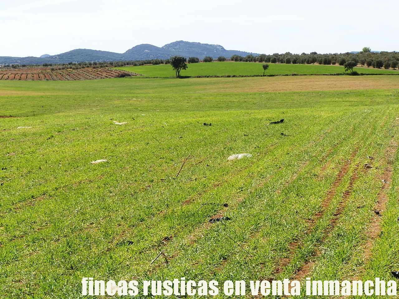 496_fincas-en-venta-0017